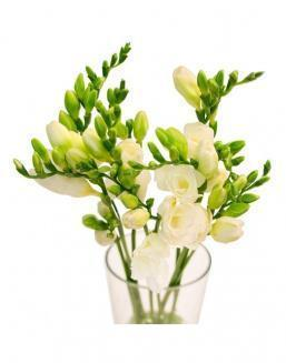 Bouquet of white freesia | Delivery and order flowers in Aktau