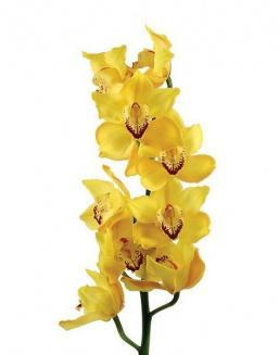 Bouquet of an orchid yellow | Delivery and order flowers in Aktau