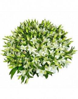 Bouquet of51 white lilies | Delivery and order flowers in Aktau